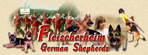 Fleischerheim German Shepherd Purebred Puppies For Sale - GSD Breeder and Importer