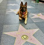 Fero - Rin Tin Tin Star -Walk of Fame